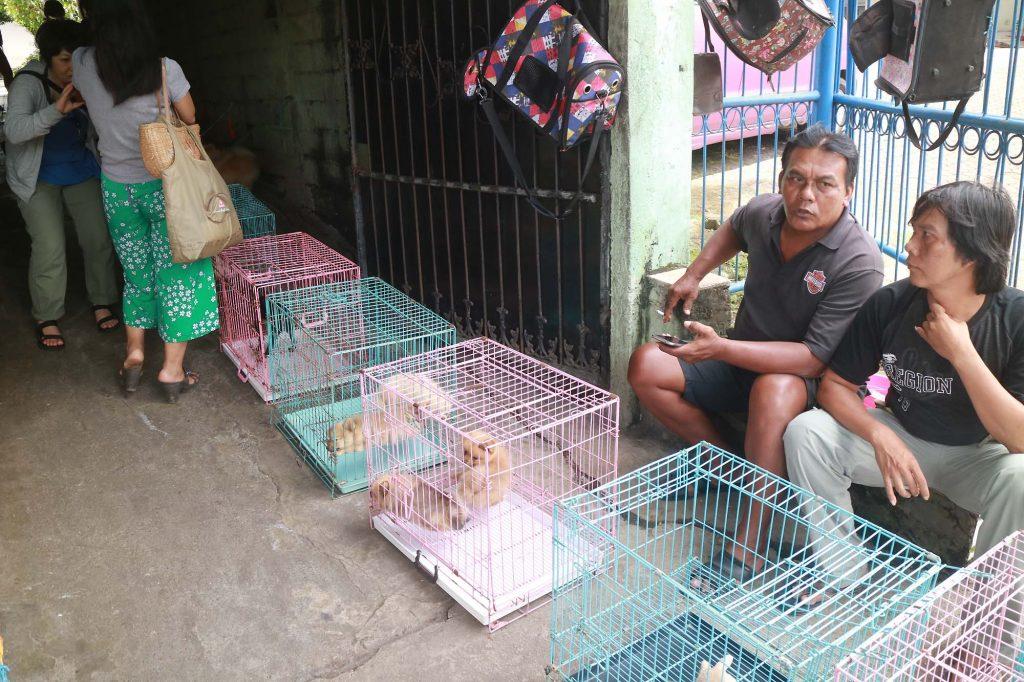 パサールブルン(鳥市場)