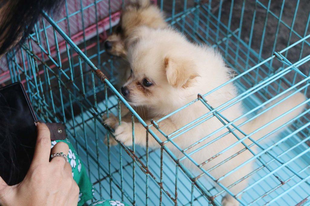 パサールブルン 子犬