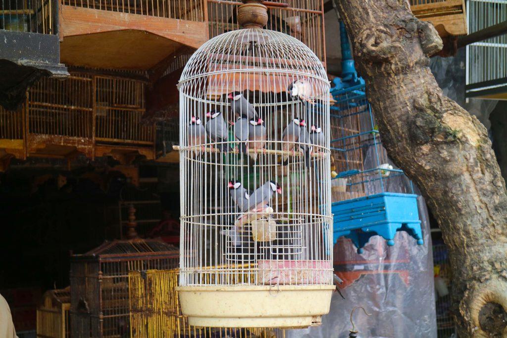 サトリア鳥市場