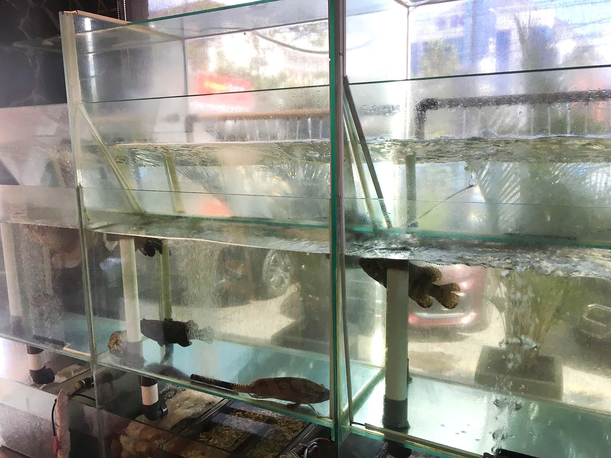 海水魚や淡水魚の水槽
