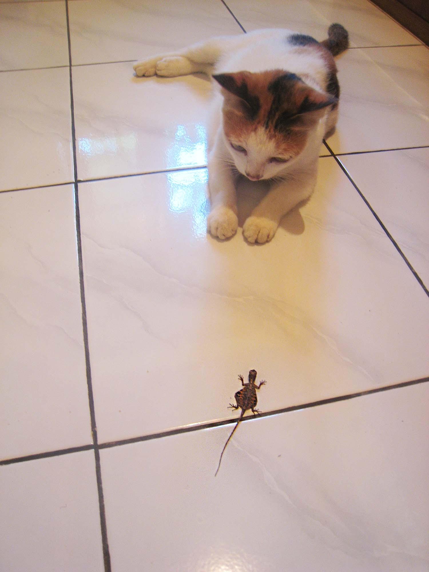 猫VSトカゲ