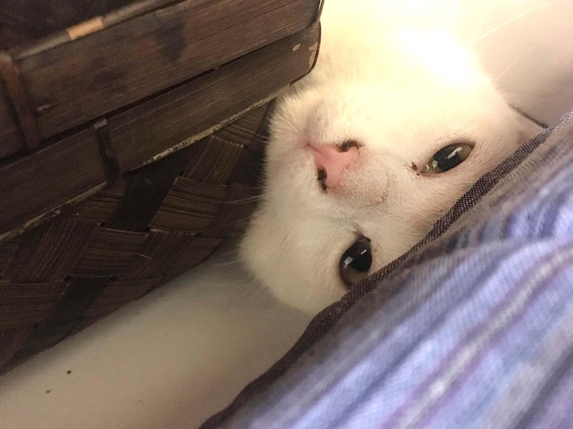 バリ島の猫