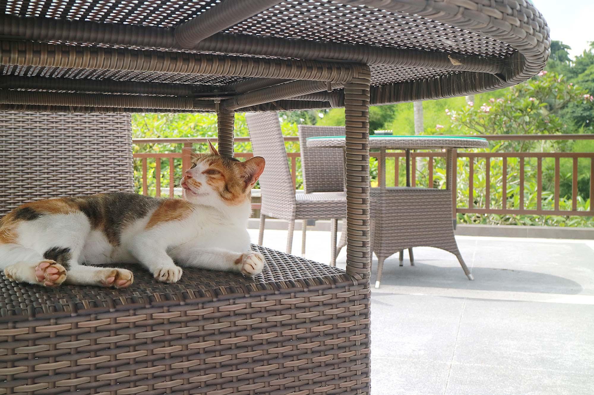 バリ島 ネコ